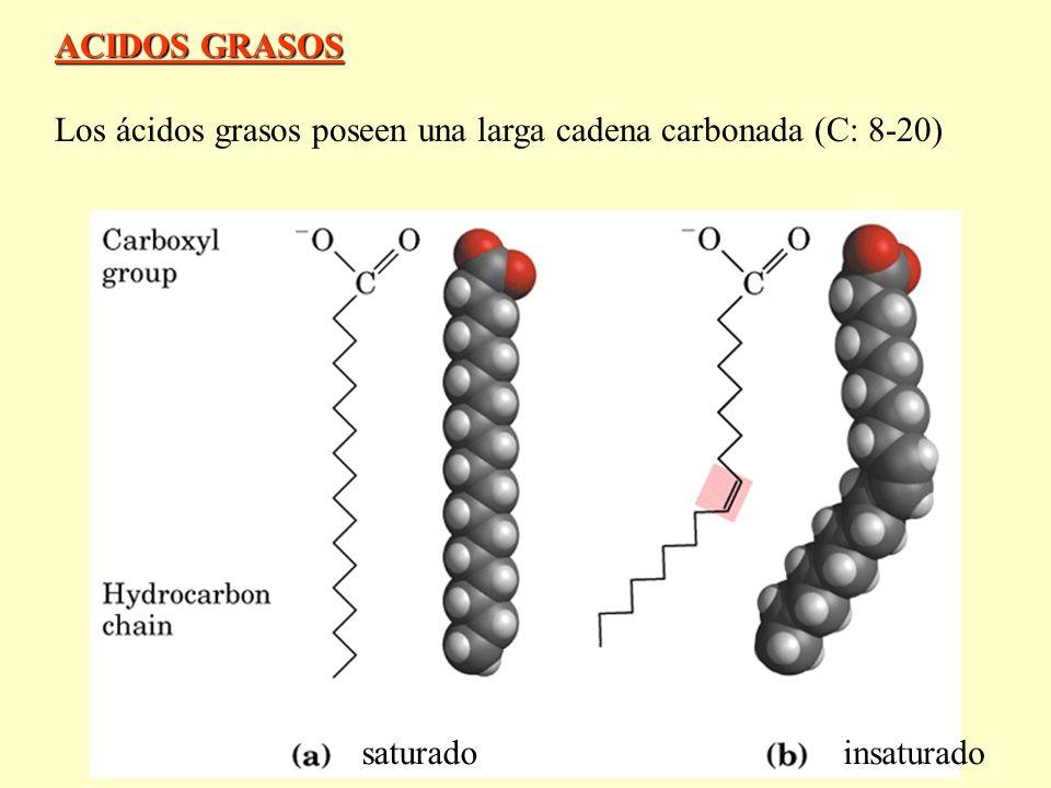 ACIDOS GRASOS Los ácidos grasos poseen una larga cadena carbonada (C: 8-20) saturadoinsaturado
