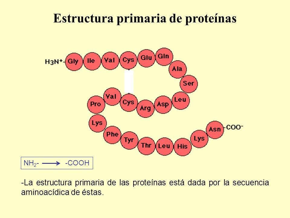-La estructura primaria de las proteínas está dada por la secuencia aminoacídica de éstas.