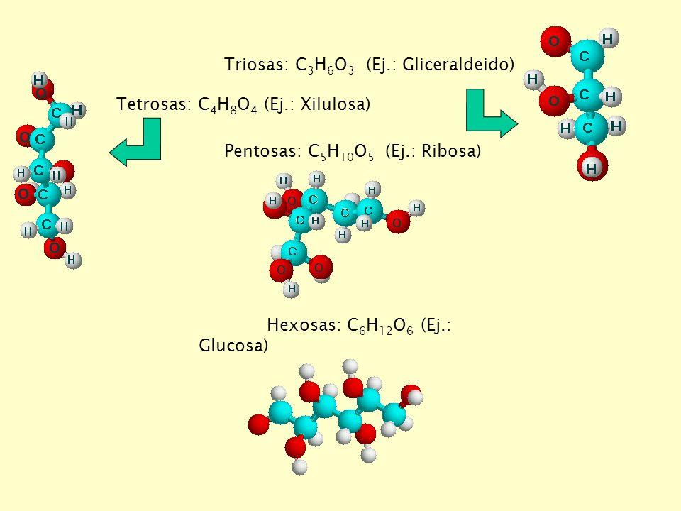 Triosas: C 3 H 6 O 3 (Ej.: Gliceraldeido) Tetrosas: C 4 H 8 O 4 (Ej.: Xilulosa) Pentosas: C 5 H 10 O 5 (Ej.: Ribosa) Hexosas: C 6 H 12 O 6 (Ej.: Glucosa)