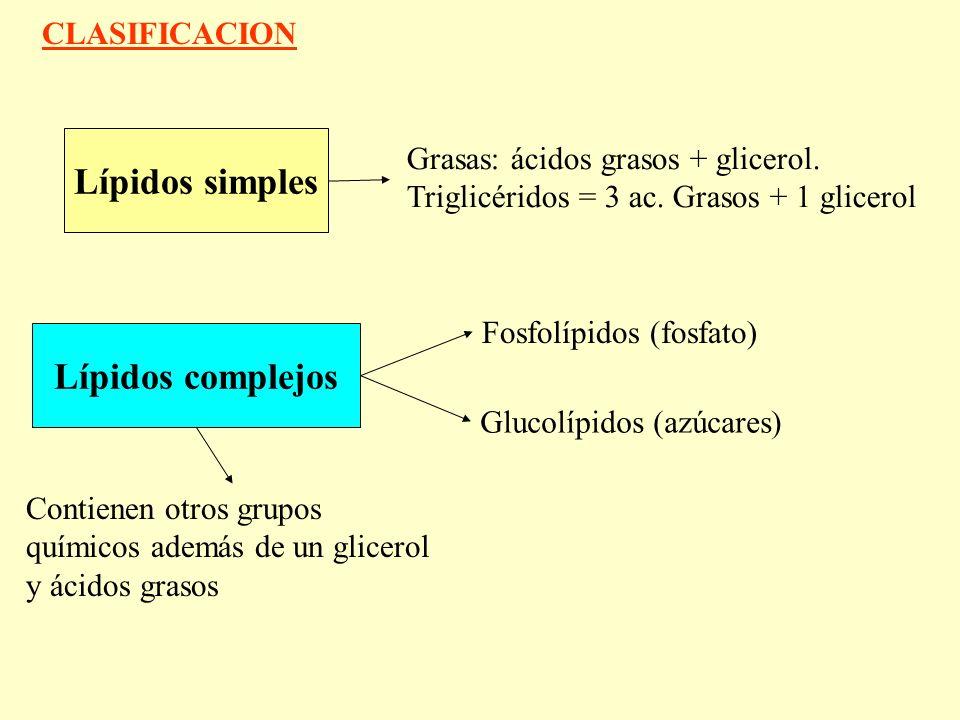 Lípidos simples Grasas: ácidos grasos + glicerol.Triglicéridos = 3 ac.
