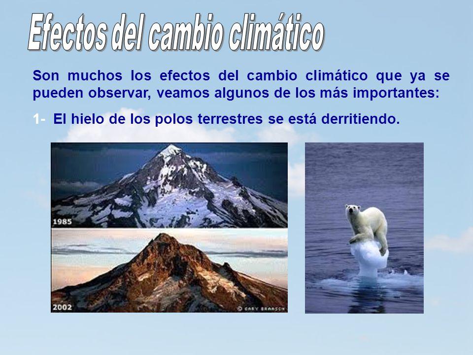 12 Son muchos los efectos del cambio climático que ya se pueden observar, veamos algunos de los más importantes: 1- El hielo de los polos terrestres s