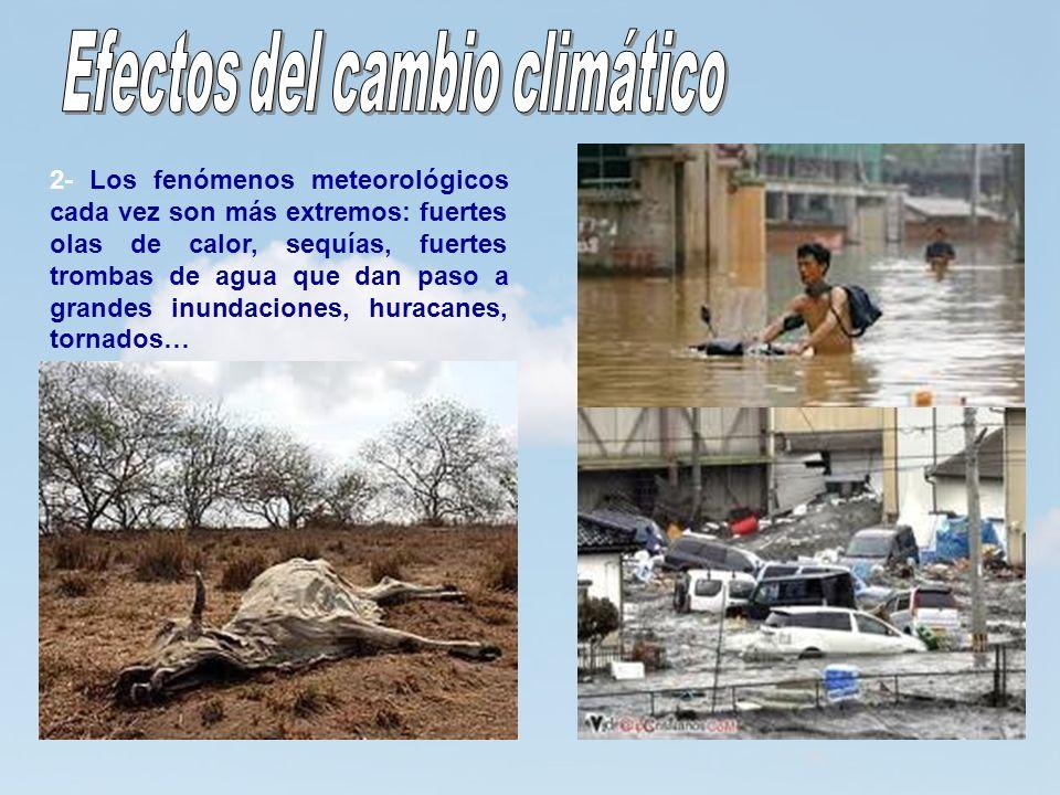 13 2- Los fenómenos meteorológicos cada vez son más extremos: fuertes olas de calor, sequías, fuertes trombas de agua que dan paso a grandes inundacio