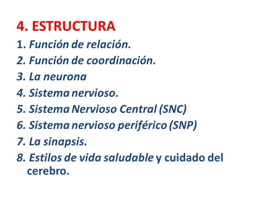 4. ESTRUCTURA 1. Función de relación. 2. Función de coordinación. 3. La neurona 4. Sistema nervioso. 5. Sistema Nervioso Central (SNC) 6. Sistema nerv
