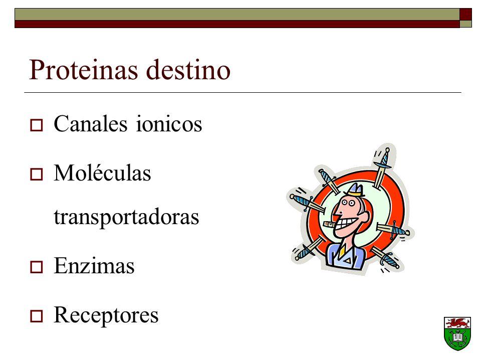 Proteinas destino Canales ionicos Moléculas transportadoras Enzimas Receptores