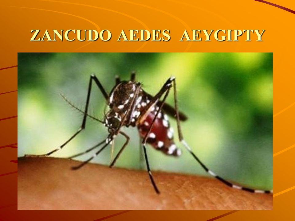 CICLO DE VIDA DEL AEDES AEGIYTY