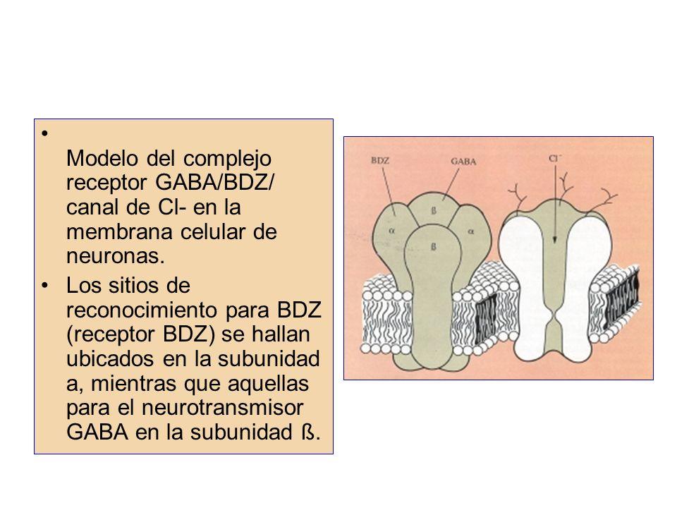 Modelo del complejo receptor GABA/BDZ/ canal de Cl- en la membrana celular de neuronas. Los sitios de reconocimiento para BDZ (receptor BDZ) se hallan