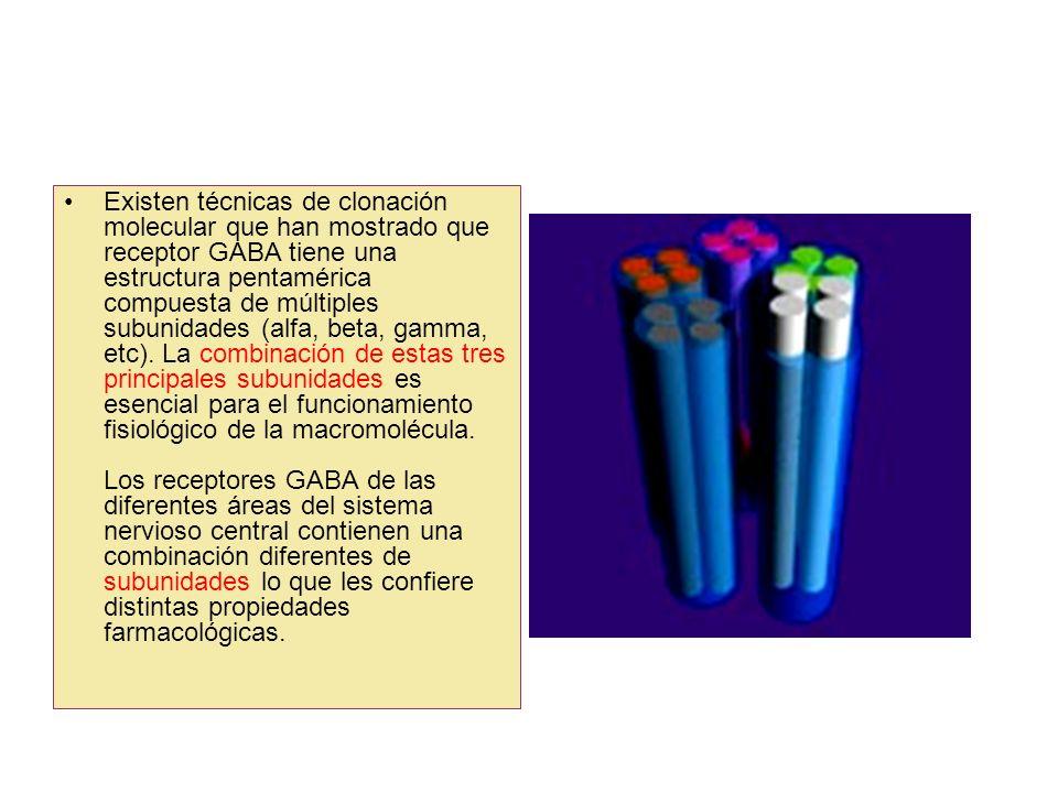 Existen técnicas de clonación molecular que han mostrado que receptor GABA tiene una estructura pentamérica compuesta de múltiples subunidades (alfa,