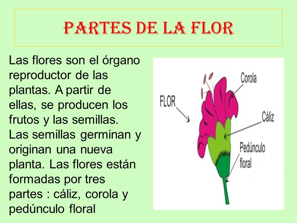 PARTES DE LA HOJA La hoja es una de las partes más importantes de los vegetales, está encargada de realizar la fotosíntesis, así como la respiración y