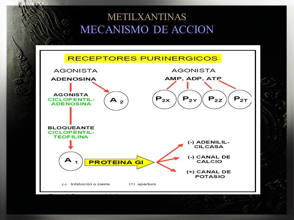 METILXANTINAS MECANISMO DE ACCION