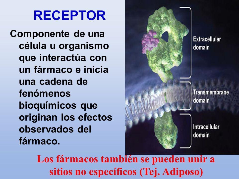 Componente de una célula u organismo que interactúa con un fármaco e inicia una cadena de fenómenos bioquímicos que originan los efectos observados de