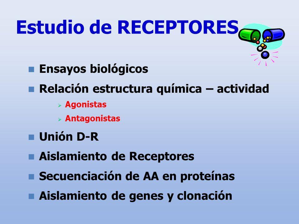 Estudio de RECEPTORES Ensayos biológicos Relación estructura química – actividad Agonistas Antagonistas Unión D-R Aislamiento de Receptores Secuenciac