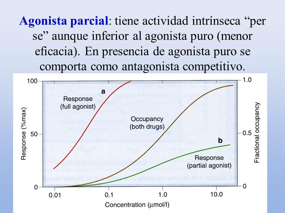 Agonista parcial: tiene actividad intrínseca per se aunque inferior al agonista puro (menor eficacia). En presencia de agonista puro se comporta como