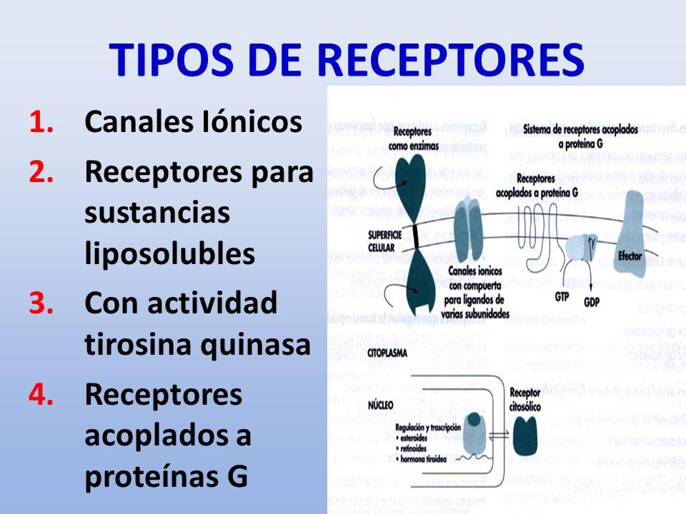 TIPOS DE RECEPTORES 1.Canales Iónicos 2.Receptores para sustancias liposolubles 3.Con actividad tirosina quinasa 4.Receptores acoplados a proteínas G