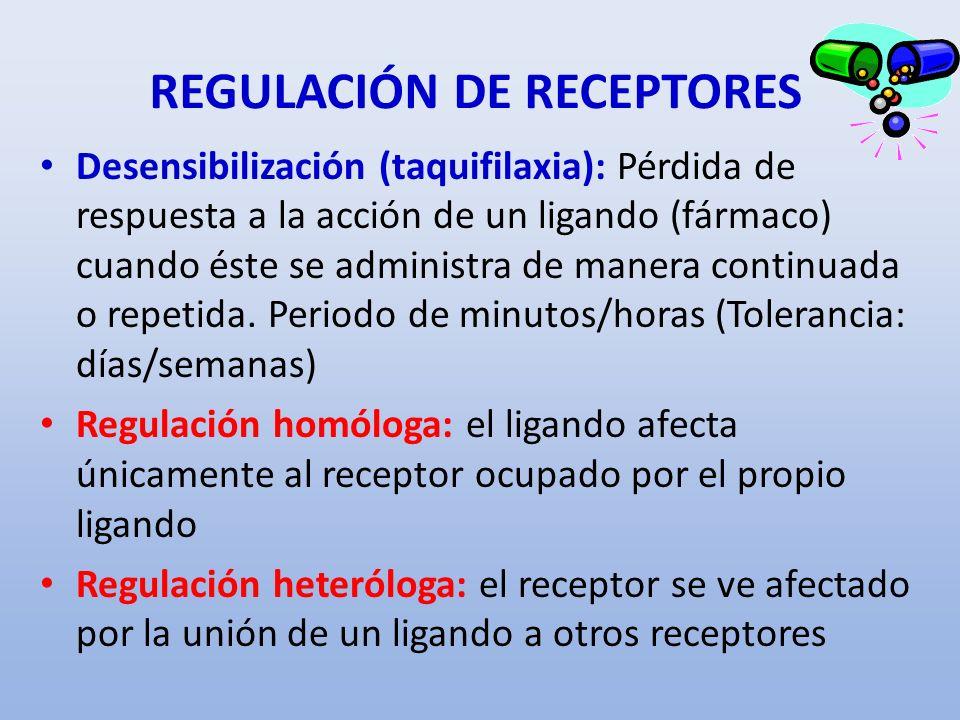 REGULACIÓN DE RECEPTORES Desensibilización (taquifilaxia): Pérdida de respuesta a la acción de un ligando (fármaco) cuando éste se administra de maner