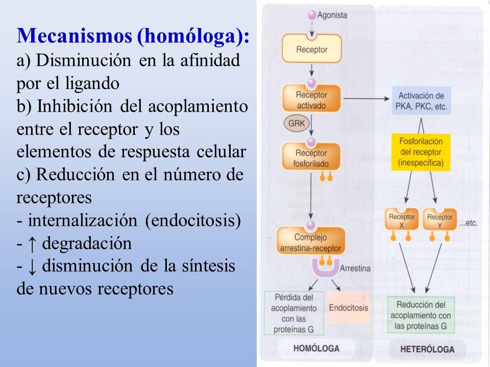 Mecanismos (homóloga): a) Disminución en la afinidad por el ligando b) Inhibición del acoplamiento entre el receptor y los elementos de respuesta celu