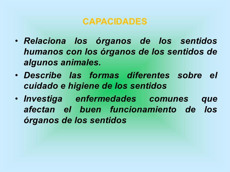 CAPACIDADES Relaciona los órganos de los sentidos humanos con los órganos de los sentidos de algunos animales. Describe las formas diferentes sobre el