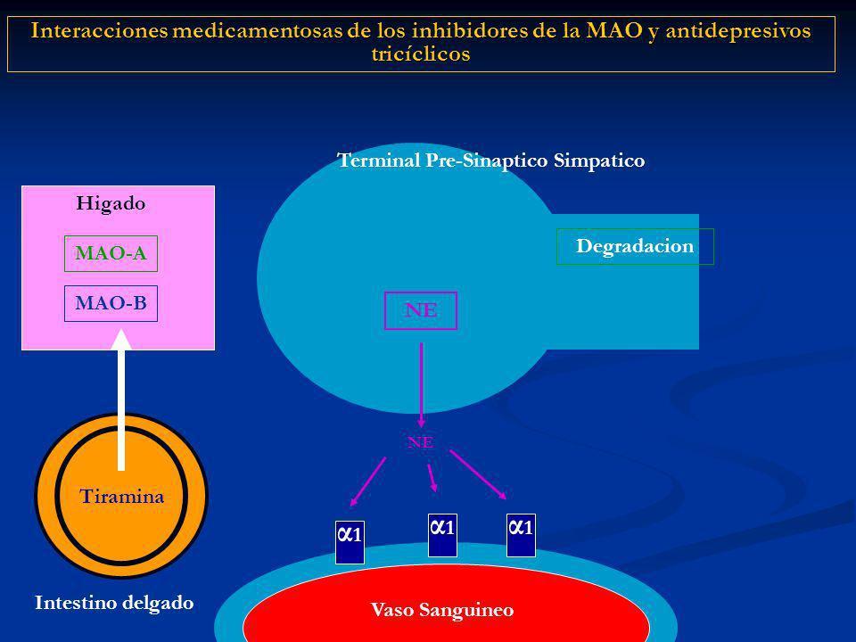 α1α1 NE Terminal Pre-Sinaptico Simpatico Degradacion Interacciones medicamentosas de los inhibidores de la MAO y antidepresivos tricíclicos α1α1 α1α1