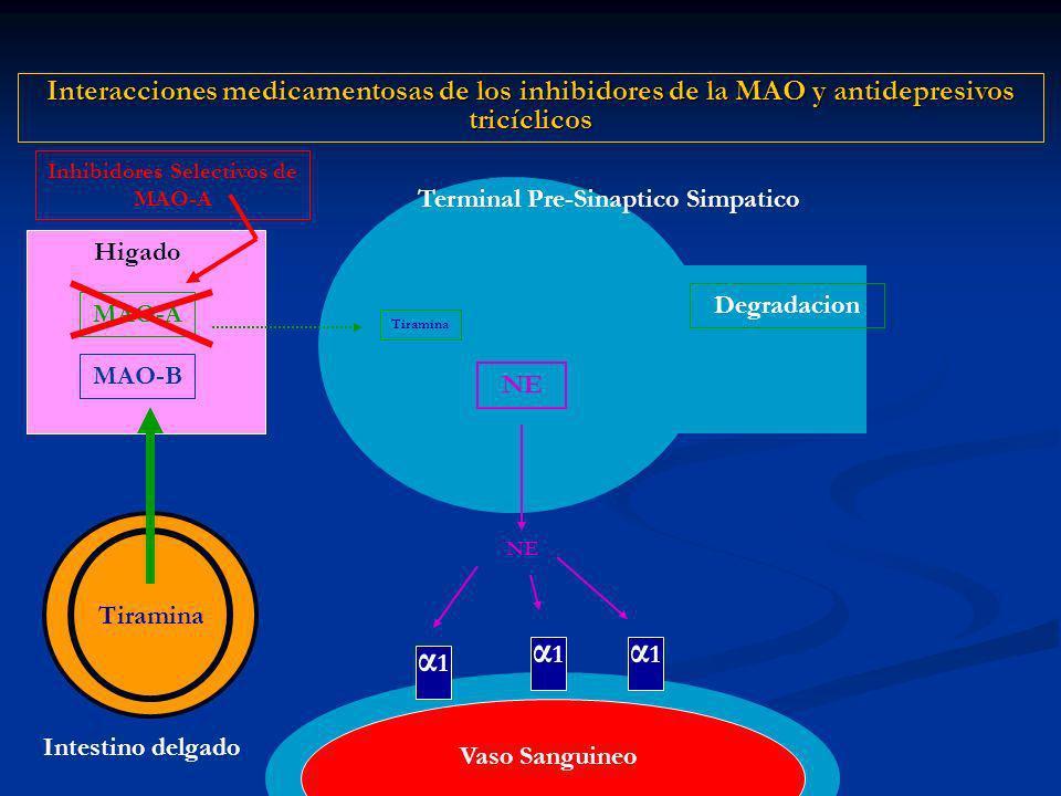 α1α1 NE Terminal Pre-Sinaptico Simpatico Degradacion Interacciones medicamentosas de los inhibidores de la MAO y antidepresivos tricíclicos α1α1 α1α1 Vaso Sanguineo Higado MAO-A Tiramina MAO-B Intestino delgado Inhibidores Selectivos de MAO-A Tiramina
