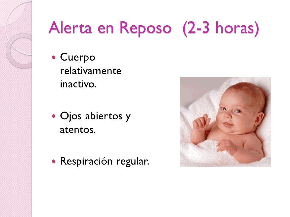 Alerta en Reposo (2-3 horas) Cuerpo relativamente inactivo. Ojos abiertos y atentos. Respiración regular.
