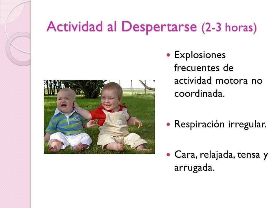 Actividad al Despertarse (2-3 horas) Explosiones frecuentes de actividad motora no coordinada. Respiración irregular. Cara, relajada, tensa y arrugada