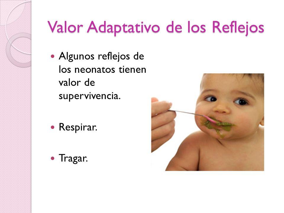 Valor Adaptativo de los Reflejos Algunos reflejos de los neonatos tienen valor de supervivencia. Respirar. Tragar.