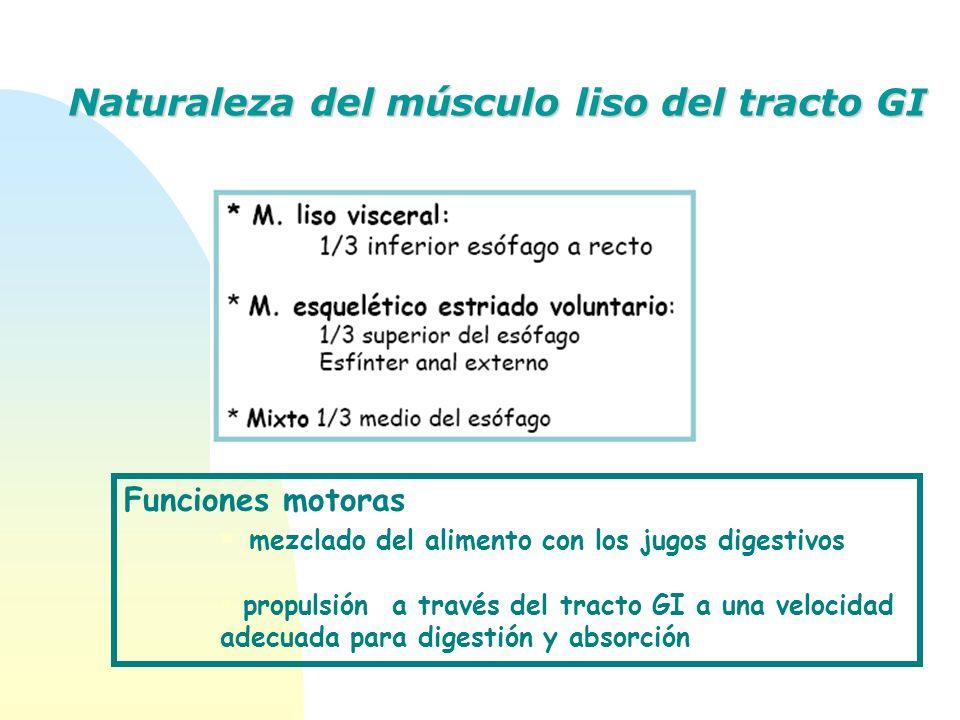 Funciones motoras mezclado del alimento con los jugos digestivos propulsión a través del tracto GI a una velocidad adecuada para digestión y absorción