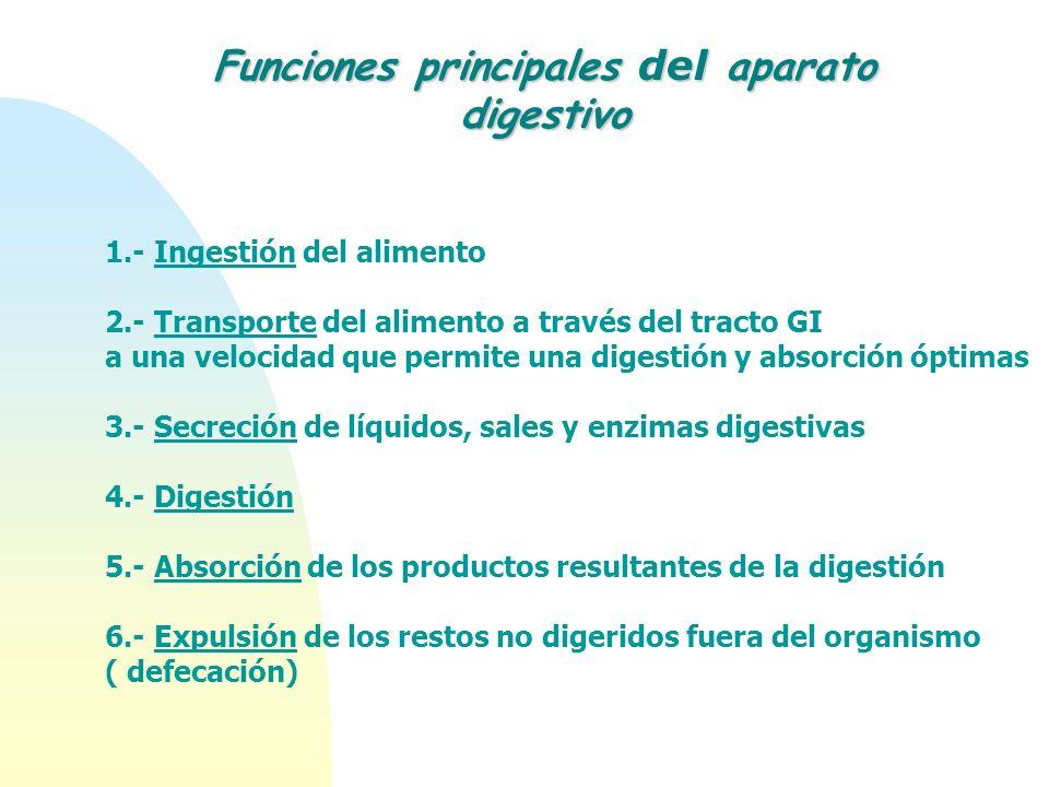 1.- Ingestión del alimento 2.- Transporte del alimento a través del tracto GI a una velocidad que permite una digestión y absorción óptimas 3.- Secrec