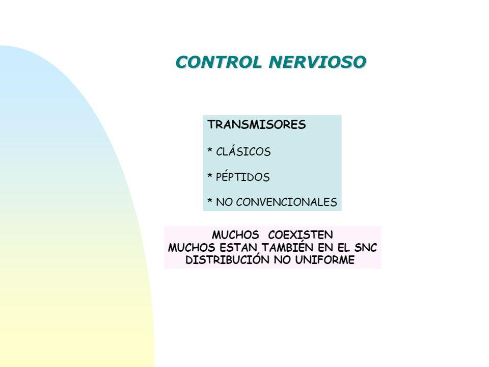 CONTROL NERVIOSO