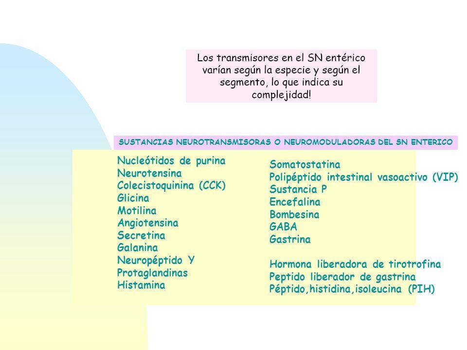 SUSTANCIAS NEUROTRANSMISORAS O NEUROMODULADORAS DEL SN ENTERICO Nucleótidos de purina Neurotensina Colecistoquinina (CCK) Glicina Motilina Angiotensin