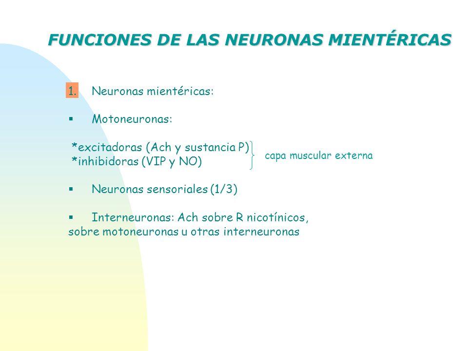FUNCIONES DE LAS NEURONAS MIENTÉRICAS 1.Neuronas mientéricas: Motoneuronas: *excitadoras (Ach y sustancia P) *inhibidoras (VIP y NO) Neuronas sensoria