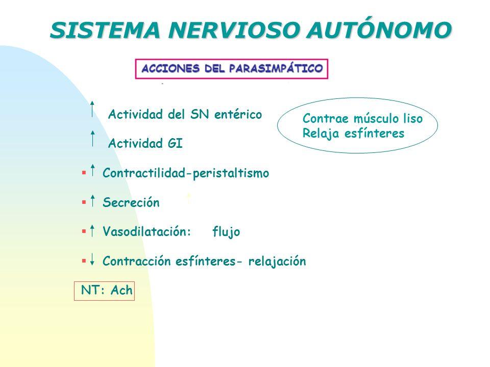 SISTEMA NERVIOSO AUTÓNOMO Actividad del SN entérico Actividad GI Contractilidad-peristaltismo Secreción Vasodilatación: flujo Contracción esfínteres-