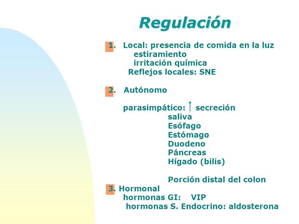 Regulación 1.Local: presencia de comida en la luz estiramiento irritación química Reflejos locales: SNE 2. Autónomo parasimpático: secreción saliva Es