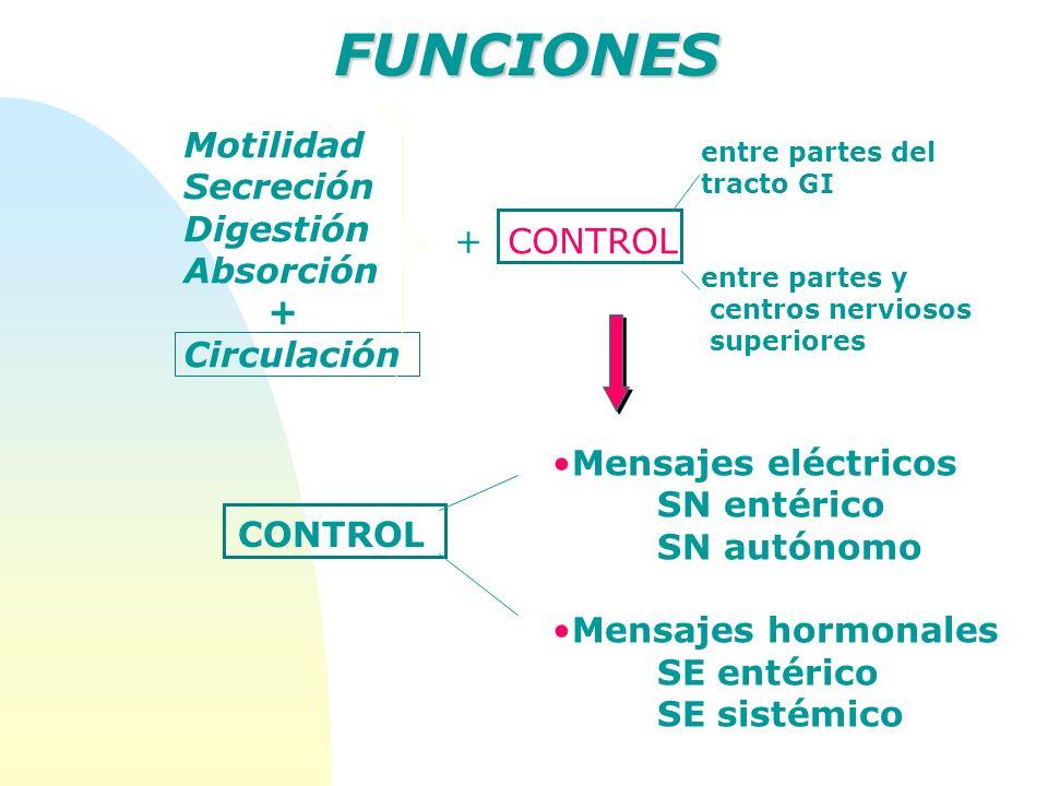 Motilidad Secreción Digestión Absorción + Circulación FUNCIONES + CONTROL entre partes del tracto GI entre partes y centros nerviosos superiores CONTR