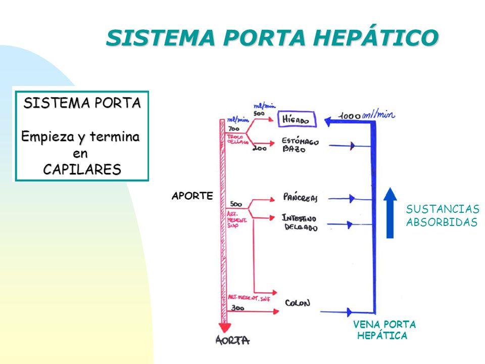 SUSTANCIAS ABSORBIDAS VENA PORTA HEPÁTICA SISTEMA PORTA HEPÁTICO