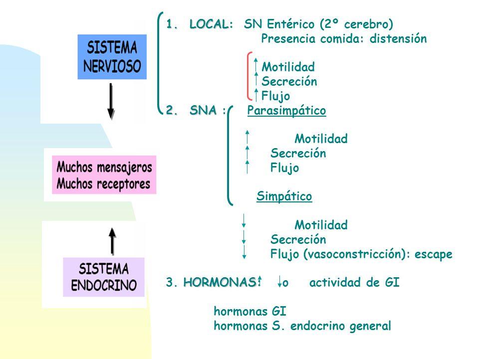 1.LOCAL: 1.LOCAL: SN Entérico (2º cerebro) Presencia comida: distensión Motilidad Secreción Flujo 2.SNA 2.SNA : Parasimpático Motilidad Secreción Fluj