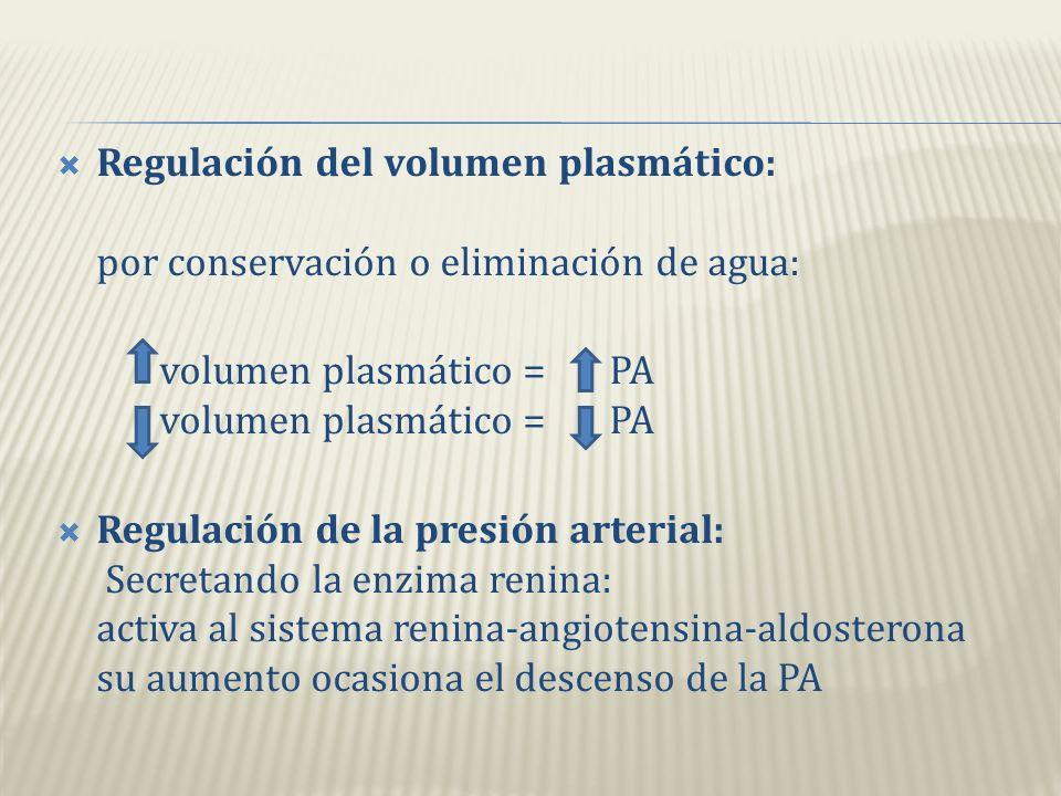 Regulación de la composición iónica de la sangre: -sodio (Na+) -potasio (K+) -calcio (Ca2+) -cloruro (Cl-) -fosfato (HPO Regulación del PH sanguíneo: