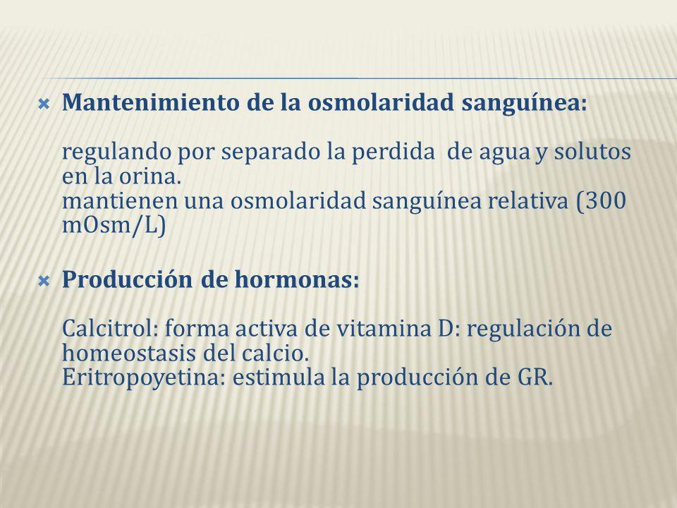 Regulación del volumen plasmático: por conservación o eliminación de agua: volumen plasmático = PA volumen plasmático = PA Regulación de la presión ar
