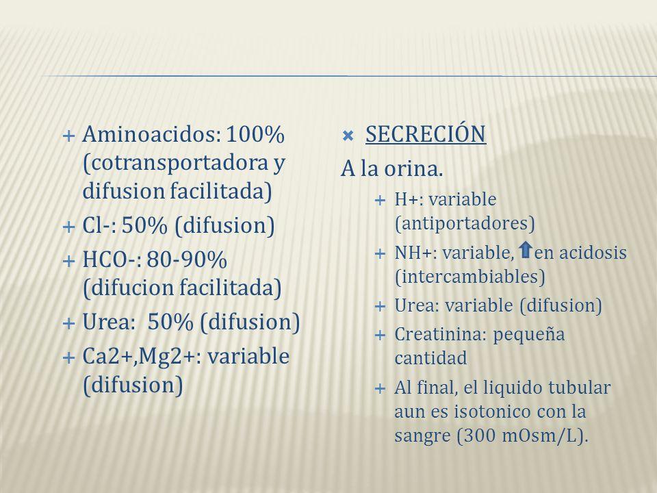 REABSORCIÓN Hacia la sangre del filtrado. Agua: 65% (osmosis) Na+: 65% (bombas de sodiopotasio, contransportadores, intercambiables) K+: 65% (difusión