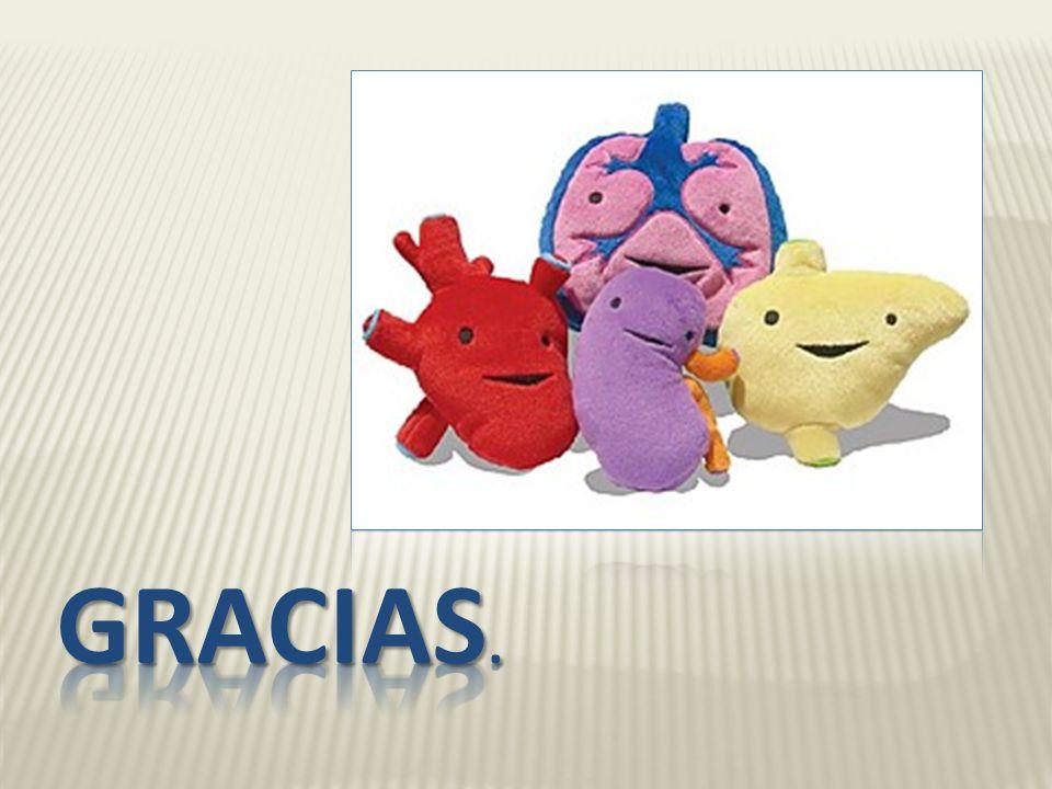 REABSORCION Hacia la sangre Urea: variable (reciclado hacia el A.H. SECRECION H+: cantidades variables para mantener la homeostasis ácido-base (bombas