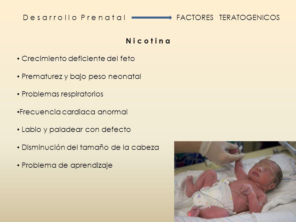 D e s a r r o l l o P r e n a t a l FACTORES TERATOGENICOS N i c o t i n a Crecimiento deficiente del feto Prematurez y bajo peso neonatal Problemas r