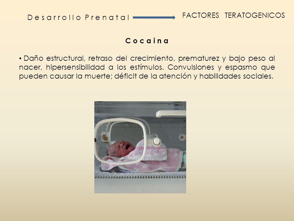 D e s a r r o l l o P r e n a t a l FACTORES TERATOGENICOS C o c a i n a Daño estructural, retraso del crecimiento, prematurez y bajo peso al nacer, h
