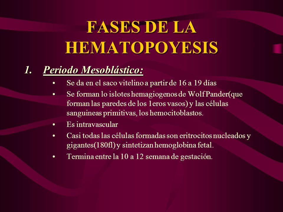 FASES DE LA HEMATOPOYESIS 1.Periodo Mesoblástico: Se da en el saco vitelino a partir de 16 a 19 días Se forman lo islotes hemagiogenos de Wolf Pander(