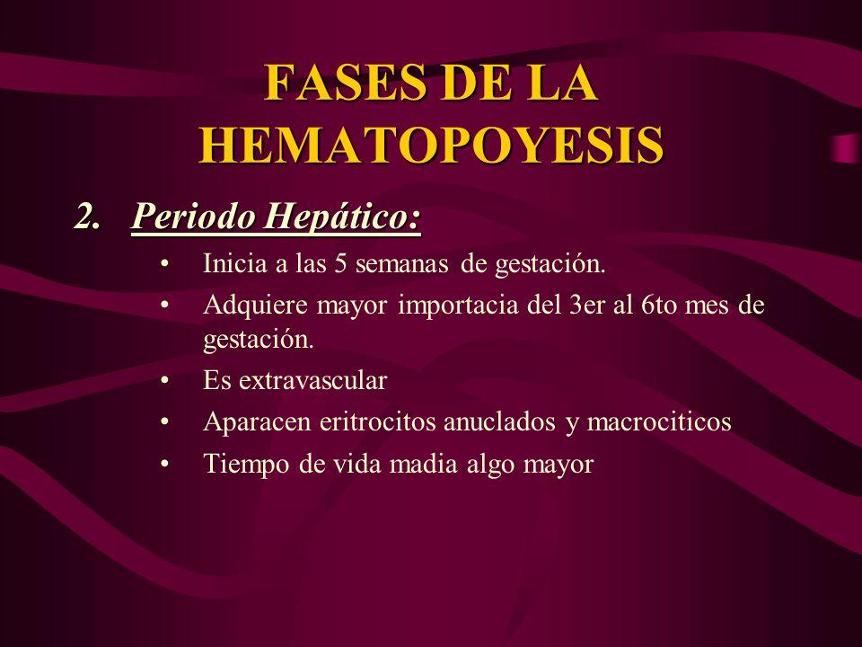 FASES DE LA HEMATOPOYESIS 2.Periodo Hepático: Inicia a las 5 semanas de gestación. Adquiere mayor importacia del 3er al 6to mes de gestación. Es extra