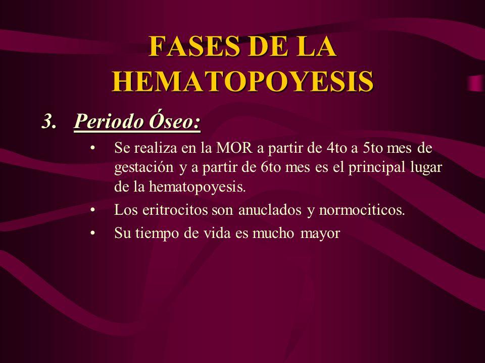 FASES DE LA HEMATOPOYESIS 3.Periodo Óseo: Se realiza en la MOR a partir de 4to a 5to mes de gestación y a partir de 6to mes es el principal lugar de l
