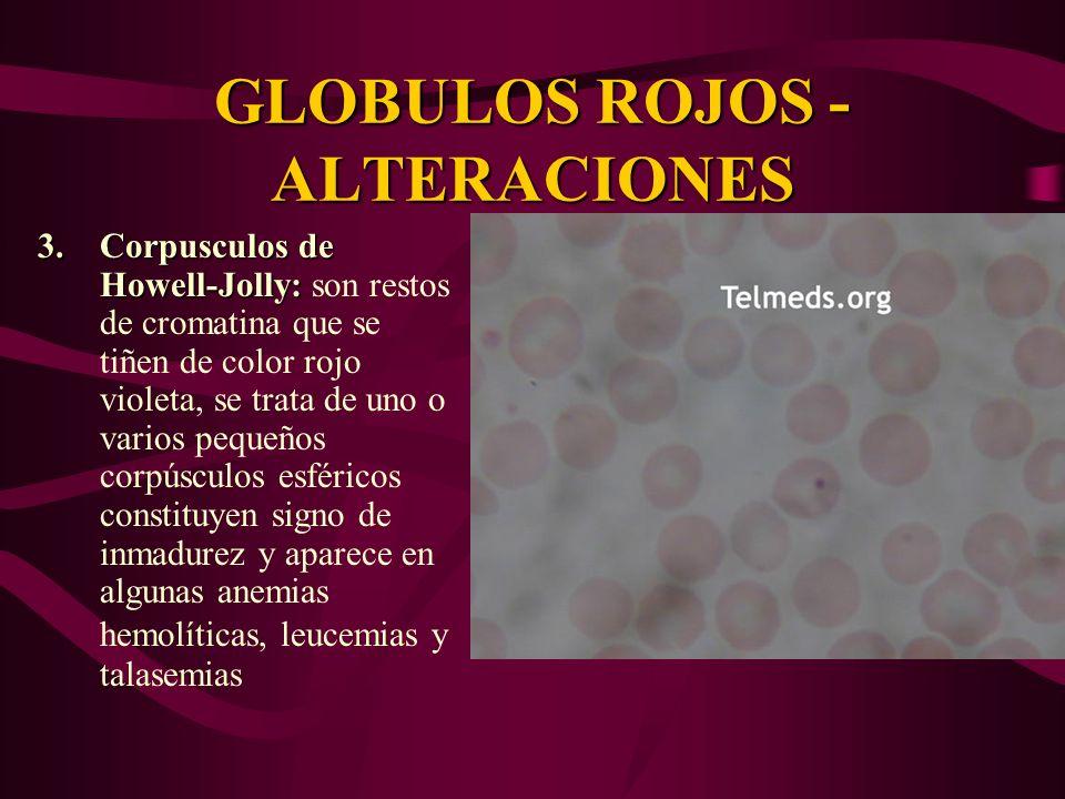 GLOBULOS ROJOS - ALTERACIONES 3.Corpusculos de Howell-Jolly: 3.Corpusculos de Howell-Jolly: son restos de cromatina que se tiñen de color rojo violeta