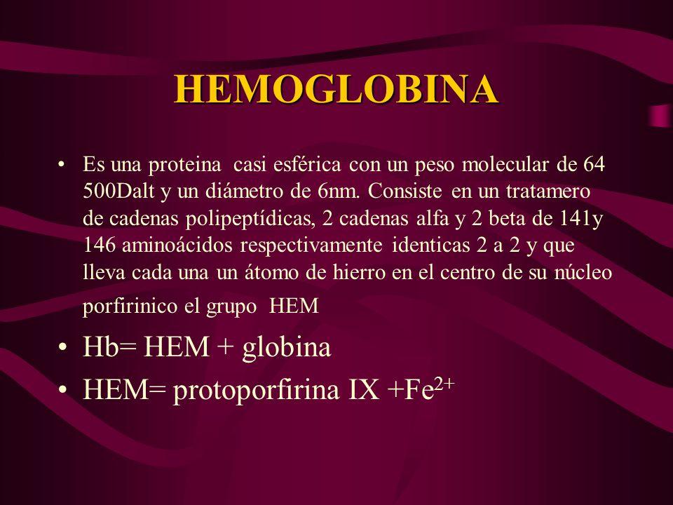 HEMOGLOBINA Es una proteina casi esférica con un peso molecular de 64 500Dalt y un diámetro de 6nm. Consiste en un tratamero de cadenas polipeptídicas