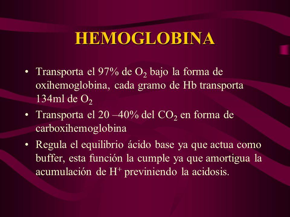 HEMOGLOBINA Transporta el 97% de O 2 bajo la forma de oxihemoglobina, cada gramo de Hb transporta 134ml de O 2 Transporta el 20 –40% del CO 2 en forma