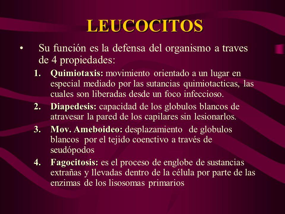 LEUCOCITOS Su función es la defensa del organismo a traves de 4 propiedades: 1.Quimiotaxis: 1.Quimiotaxis: movimiento orientado a un lugar en especial