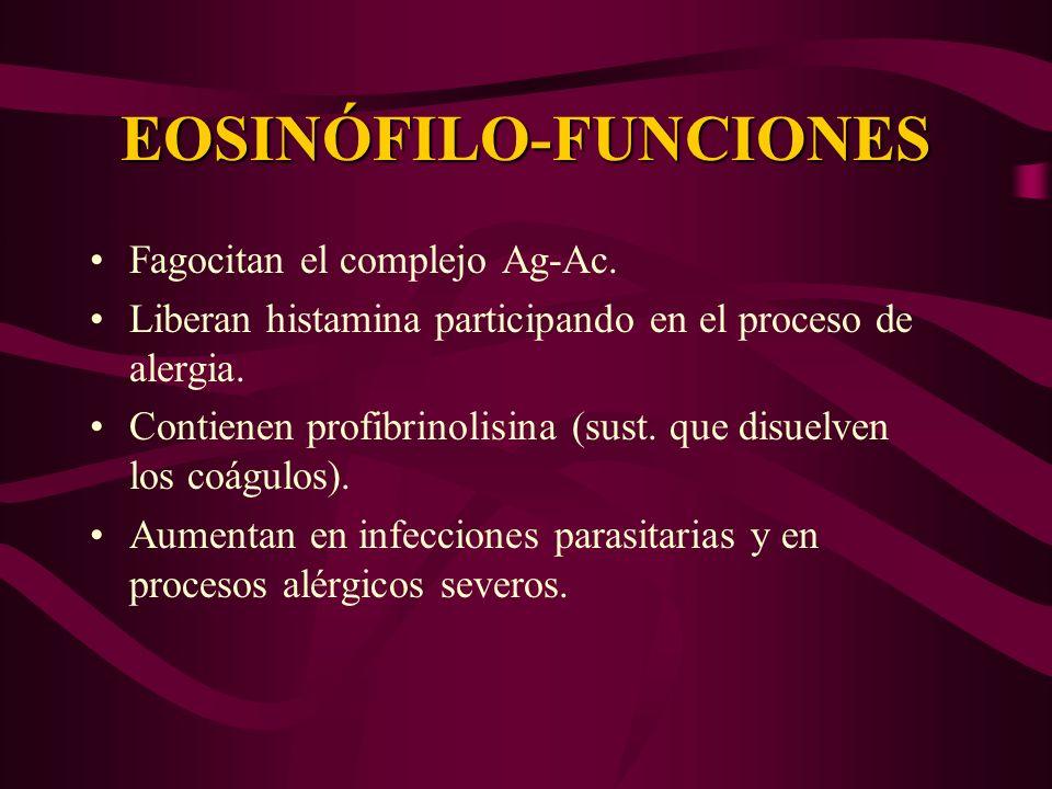 EOSINÓFILO-FUNCIONES Fagocitan el complejo Ag-Ac. Liberan histamina participando en el proceso de alergia. Contienen profibrinolisina (sust. que disue