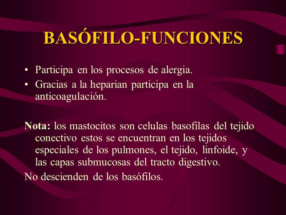 BASÓFILO-FUNCIONES Participa en los procesos de alergia. Gracias a la heparian participa en la anticoagulación. Nota: Nota: los mastocitos son celulas